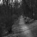 Joggers' path