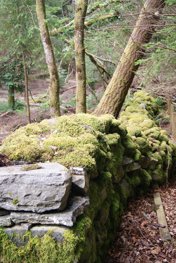 Mur en pierres sèches dans la forêt à proximité d'Invermoriston