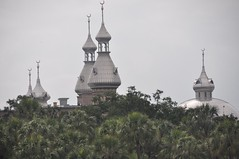 Jungle or university ... University of Tampa