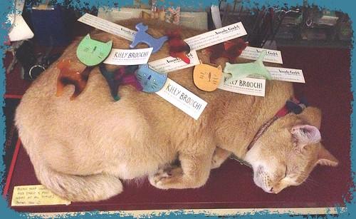 Sleeping Kitteh3