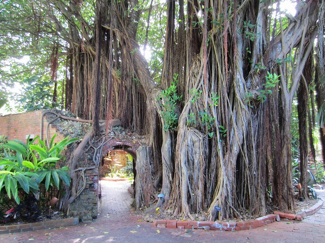 Banyan with a door