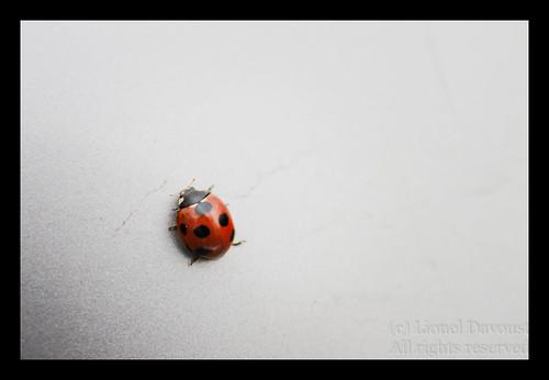 Ladybug on the wall