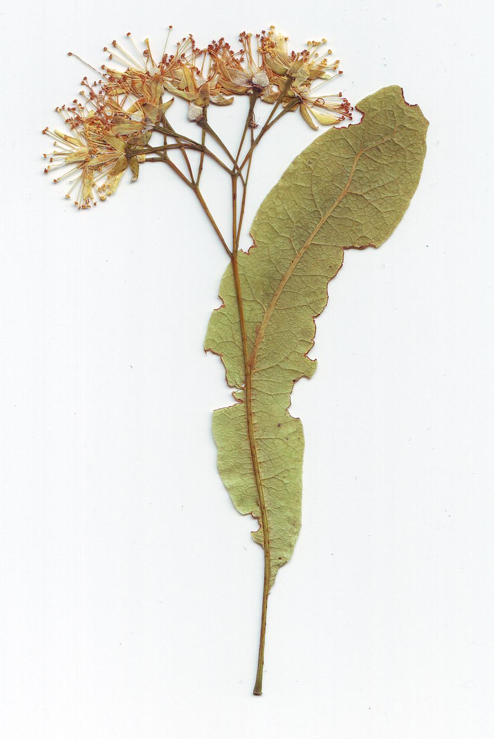 Foto gratis de unas flores con una gran hoja verde