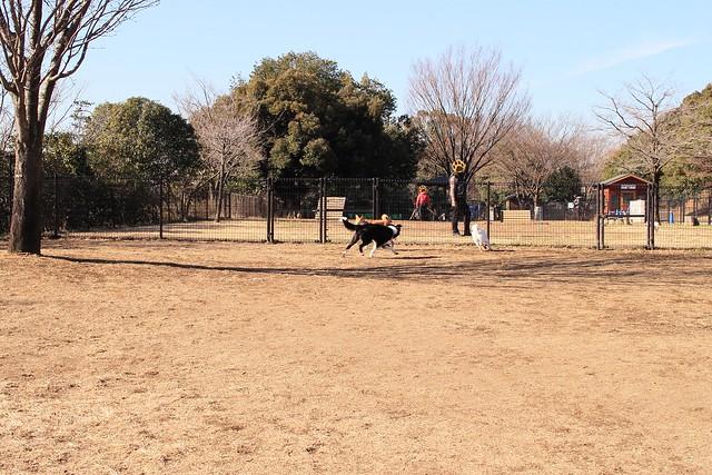 01_14_dog_run_0004
