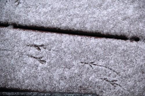 20150305_SNOW_006