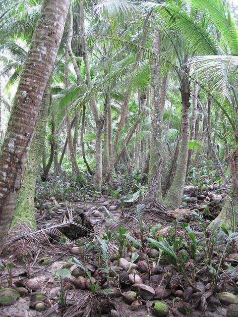 Picture from Haputo Beach, Guam