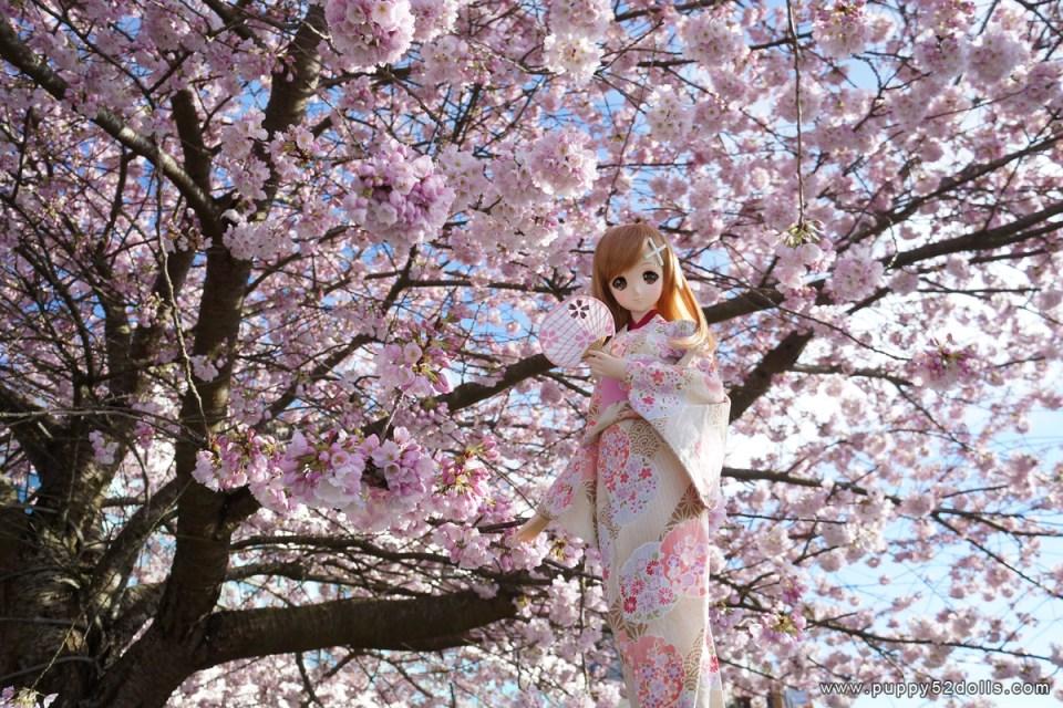 Resultado de imagem para Hanami