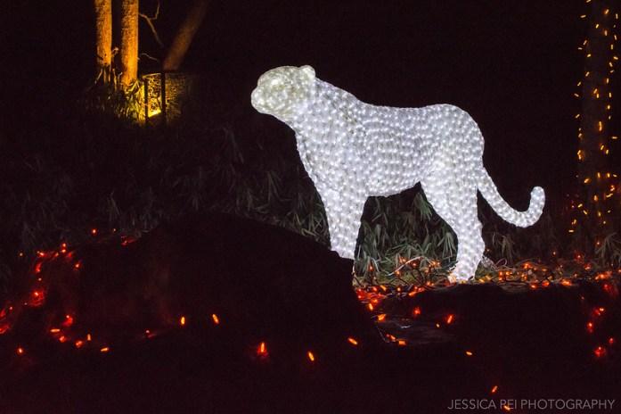 Cheetah Christmas Light Display at St. Louis Zoo Wild Lights