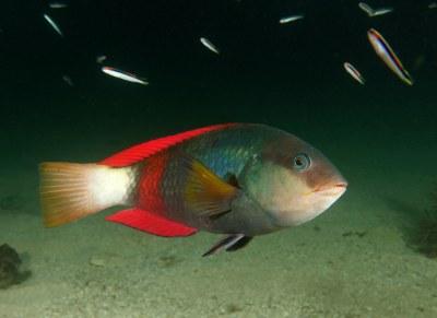 Fish don't care for Facebook #marineexplorer