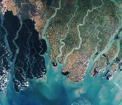 Sundarbans web
