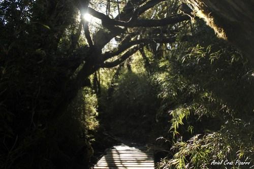 Valdivia - Parque Oncol