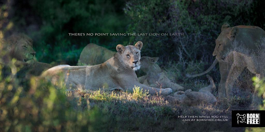 Born Free Foundation - Disappearing Animals Jaguar