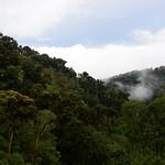 01 Viajfilos en Panama. Sendero Quetzal 43