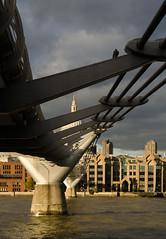 Pigeon on the bridge