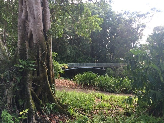 Picture from the Wahiawa Botanical Garden