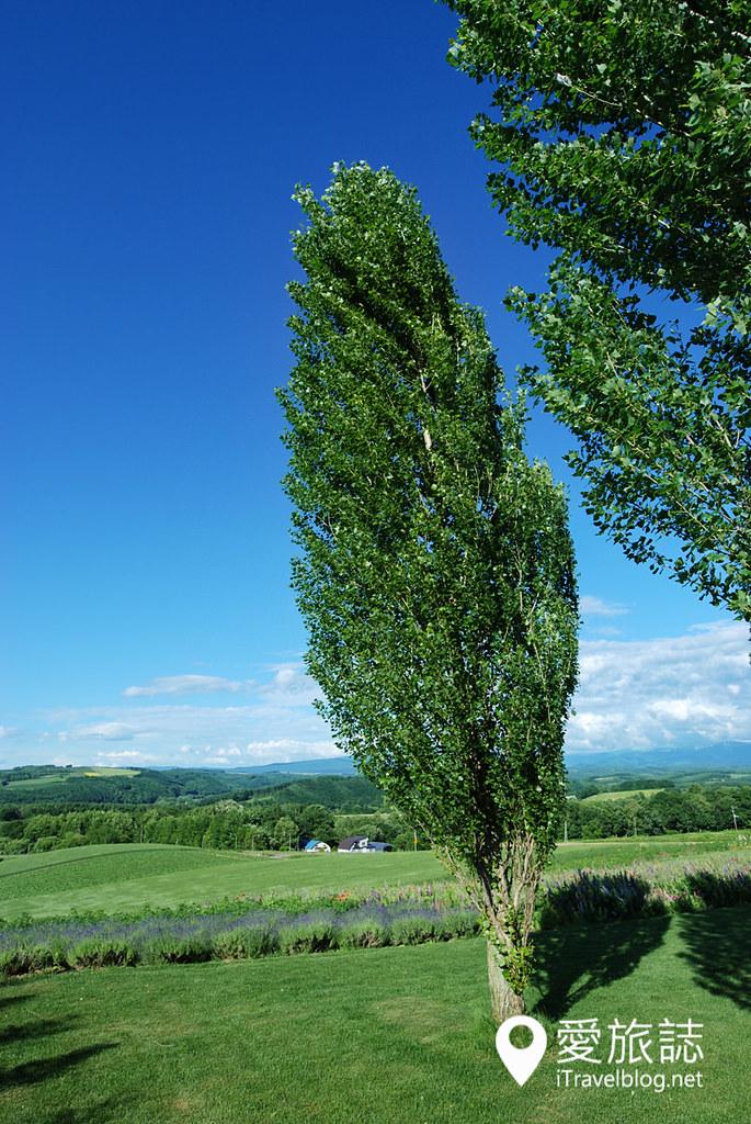 美瑛景点推荐 Ken & Mary之树 25