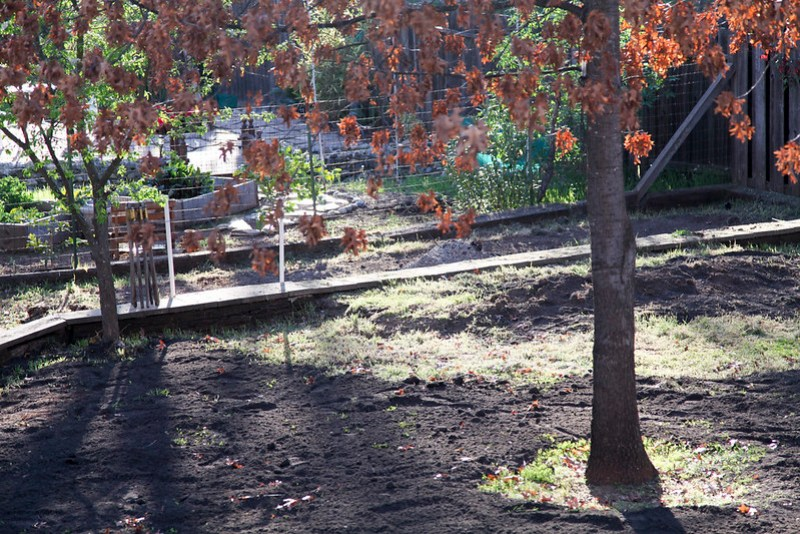 New Soil in the Backyard