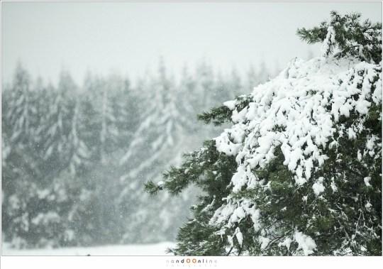 sneeubui op de stippelberg