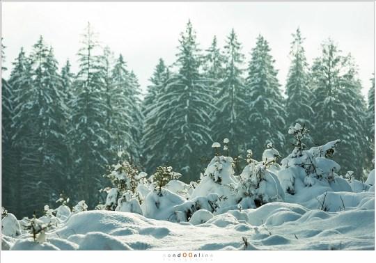 Heerlijk licht met de laagstaande zon in de winter, in de bossen rondom het riviertje de Getzbach.