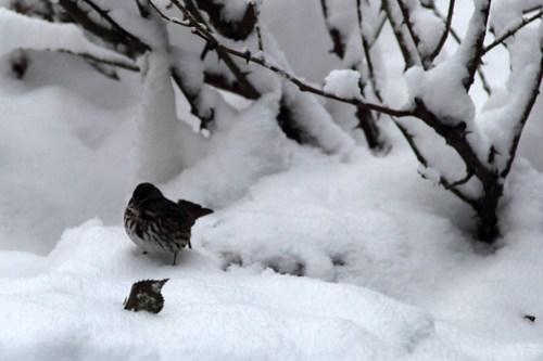 20150305_SNOW_028