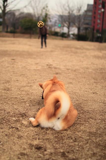 01_14_dog_run_0036