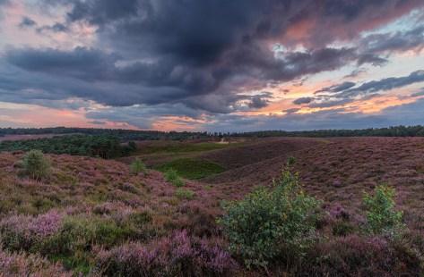 The return of the purple hills #Posbank @veluwezoom