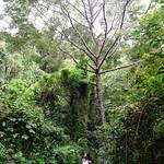 01 Viajfilos en Panama. Sendero Quetzal 33