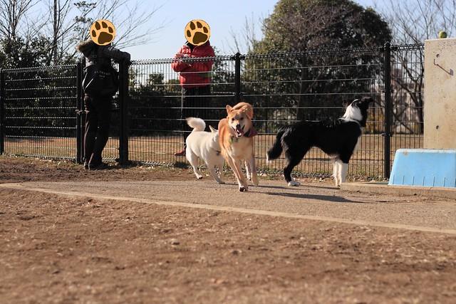 01_14_dog_run_0009