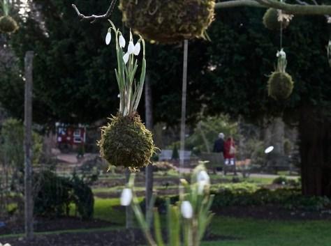 Snowdrop Days, Chelsea Physic Garden