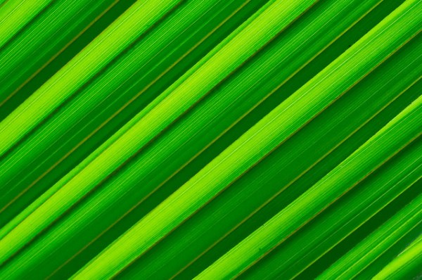 Green nature abstract