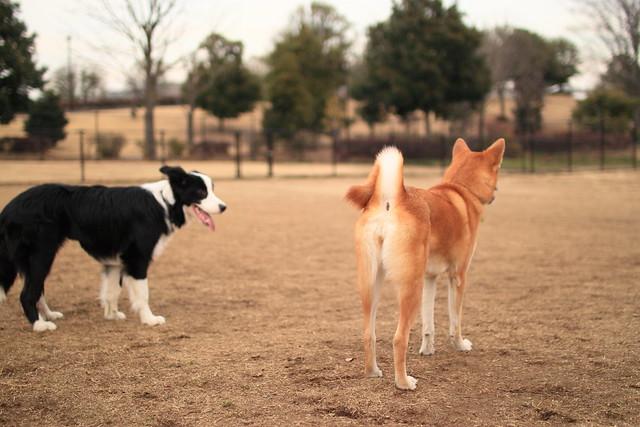 01_14_dog_run_0030
