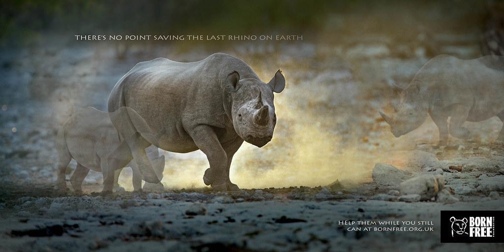 Born Free Foundation - Disappearing Animals Rhino