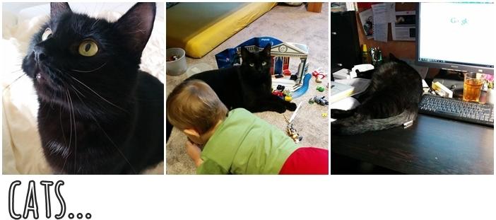 Instagram Jänner 15_Cats