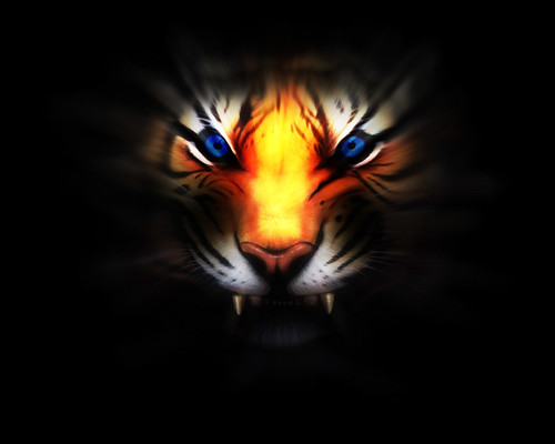 Tigers 4K Wallpaper
