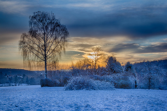 Wintermorgen / Winter Morning