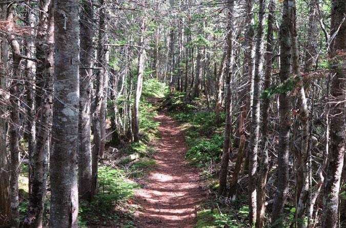 Rollins Trail