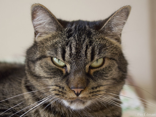 Sharp-looking cat