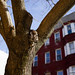 Zeiss 35mm f_2 Loxia Пример фотографий 6