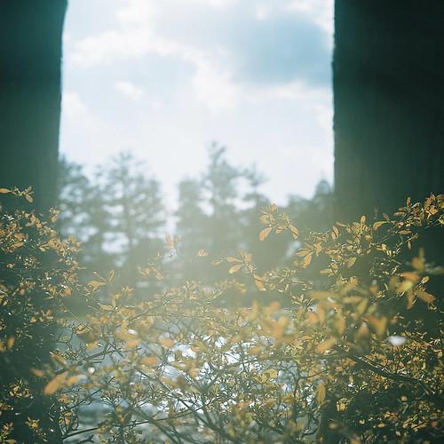 Rolleiflex_03_03