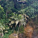 08 Viajefilos en Panama. Isla de Bocas 04
