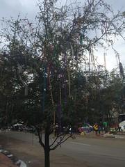 1133 Bead Tree