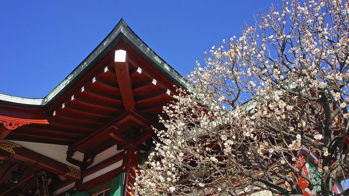 White haya-zakura or early-sakura at Kameido Tenjin Shrine