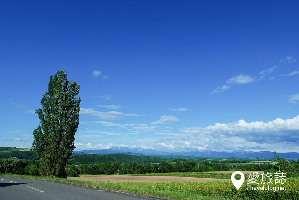 《北海道自驾游》Ken & Mary Tree:日产汽车广告捧红40年的美瑛景点。