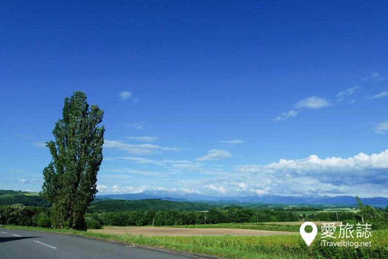 《北海道自驾游》Ken & Mary Tree:日产汽车广告捧红40年的美瑛景点