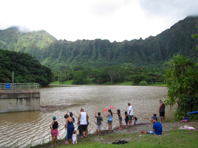 Picture from the Ho'omaluhia Botanical Garden