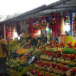 14 Viajefilos en Sri Lanka. Yala 51