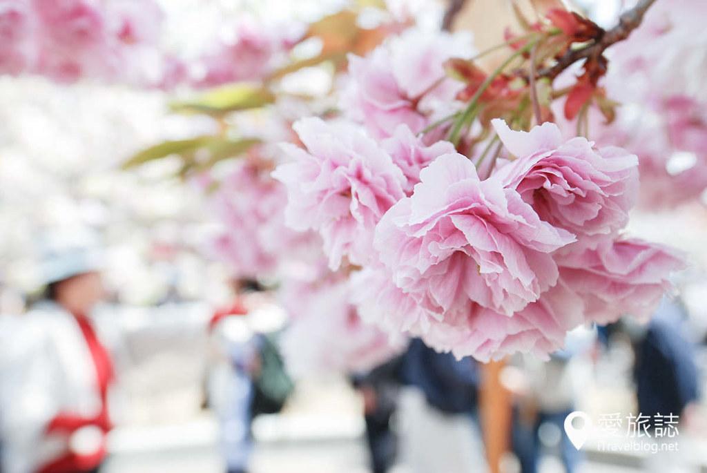 大阪造币局 樱花 17