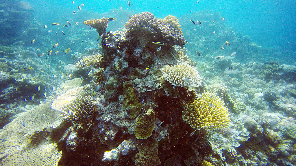 A taste of the snorkeling in Gili Meno.