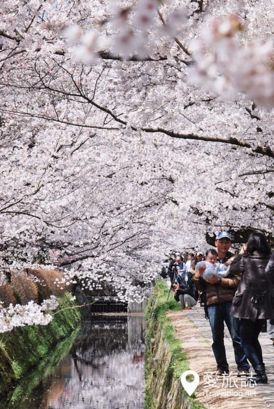 京都赏樱景点 哲学之道 18