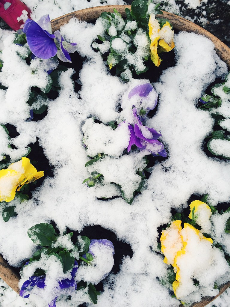 Baby Checkup and Snow in April (4/2/15)